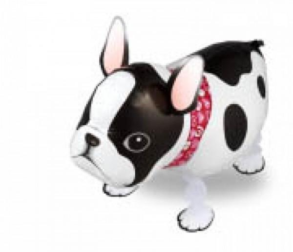 Ballongruß: Bulldogge, Airwalker, ca. 54 cm